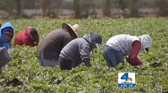 NBC news reported Farm Workers Fired for Leaving Fields During California Wildfires